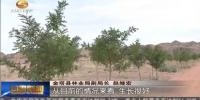 【抓落实促发展】甘肃:坚持生态优先 为绿水青山筑起安全屏障 - 甘肃省广播电影电视