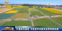 (喜迎十九大)打通南向通道 为甘肃省外向型农业带来新机遇 - 甘肃省广播电影电视