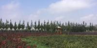 深秋时节,在兰州红古现代有机观光农业示范区,昔日荒凉的山头已不见了踪影,取而代之的是成片的特色经济林果、防风林带、五彩花圃,以及马铃薯种植基地,生态效益与经济效益正在逐步显现。 徐雪 摄 - 甘肃新闻