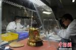 资料图。图为甘肃省博物馆文物修复现场。 杨艳敏 摄 - 甘肃新闻