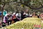 资料图。图为在甘肃张掖老寺庙农场里,工人们将刚刚采摘的苹果梨进行精选、包装。 钟欣 摄 - 甘肃新闻