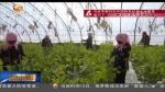 (三年决战奔小康)甘肃:特色产业增添脱贫新动力 - 甘肃省广播电影电视