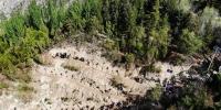 图为绿化后的甘肃兰州市南北两山一隅。图中松柏苍翠,绿意盎然。(资料图) 杨艳敏 摄 - 甘肃新闻
