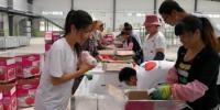 图为获得资助的大学生学习苹果装箱。刘玉桃 摄 - 甘肃新闻