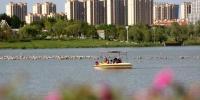 """图为游客在兰州新区人工湖中""""乐游""""。 丁凯 摄 - 甘肃新闻"""