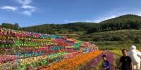 """初秋时节,甘肃甘南藏族自治州正值旅游旺季,成片的花海分布在藏寨的周围,""""花经济""""已然成了当地旅游的另一热点。 徐雪 摄 - 甘肃新闻"""