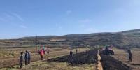 图为在甘肃渭源县会川镇标准化种植的药材地里,驶过的农用机车快速地将黄芪从土里翻出。 徐雪 摄 - 甘肃新闻