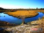 图为祁连山腹地张掖黑河两岸的红柳火红遍地。(资料图) - 甘肃新闻