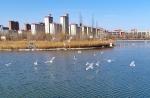 """【飞阅甘肃】张掖:河西走廊上的""""湿地之城"""" - 中国甘肃网"""