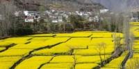 图为甘肃陇南文县丹堡镇油菜种植基地。 刘玉玺 摄 - 甘肃新闻