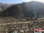 图为宕昌县的中药材。(资料图) 闫姣 摄 - 甘肃新闻