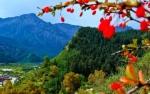 甘肃肃南:秋日祁连山层林尽染 - 中国甘肃网