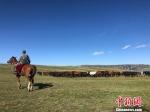 图为山丹马场的秋日牧马景致。 徐雪 摄 - 甘肃新闻