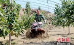唐峰使用土地旋耕深松机在大棚里作业。 耿洋洋 摄 - 甘肃新闻