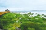 保护草原,让母亲河青春永驻 - 中国甘肃网