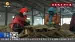 【脱贫攻坚奔小康】甘肃:药材迎丰收 农民喜增收 - 甘肃省广播电影电视