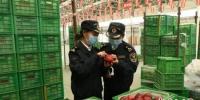 2月13日,甘肃天水市麦积区仙果农民专业合作社生产的30吨鲜苹果经兰州海关检疫合格,拟出口尼泊尔。兰州海关供图 - 甘肃新闻