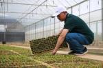 云南昆明:高原特色蔬菜育种忙 - 中国甘肃网