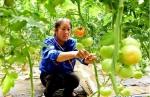 河南汝南:带贫模式为民增收 - 中国甘肃网