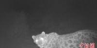 图为甘肃安西自然保护区生态环境向好,首次发现雪豹踪迹。(资料图) 杜萍 摄 - 甘肃新闻