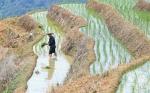 福建政和:保护农业生态资源 展现梯田独特景观 - 中国甘肃网