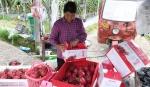 福建政和:发展特色农业 助力乡村振兴 - 中国甘肃网