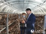 """甘肃陇西:立足产业助脱贫香菇采收""""致富花"""" - 人民网"""