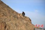 """图为敦煌""""80后""""画家张杰龙在敦煌三危山里采集矿石颜料。(资料图)受访者供图 - 甘肃新闻"""