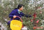 甘肃灵台乡村旅游采摘体验活动启动 - 中国甘肃网