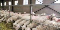 图为甘肃金昌市一企业养殖场。(资料图) 艾庆龙 摄 - 甘肃新闻