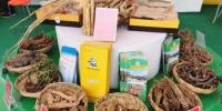 图为甘肃陇南市所产中药材。2020年前三季度,甘肃中药材产量预计同比增长7.6%。(资料图) 闫姣 摄 - 甘肃新闻