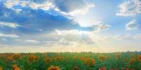 【小康圆梦·看甘肃】瓜州:花卉盛开景似海 特色小镇产业兴 - 中国甘肃网