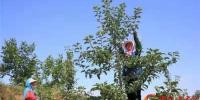 【母亲河畔的中国】天水秦安:葫芦河畔苹果飘香 - 中国甘肃网